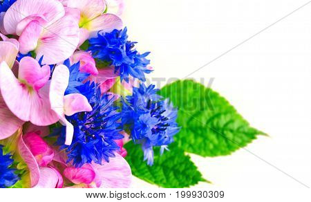 Summer fragrant bouquet cornflowers and sweet peas closeup white background horizontal selective focus