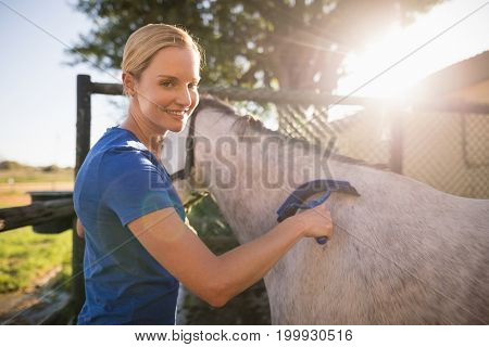 Portrait of smiling female jockey cleaning horse with sweat scraper at barn