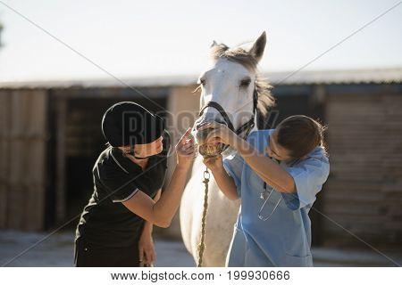 Female jockey and vet examining horse mouth at barn