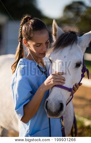 Female vet stroking white horse while standing at paddock