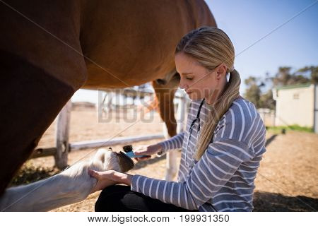 Side view of female vet attaching horse shoe on foot at paddock