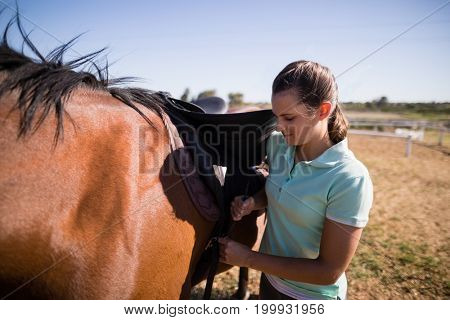 Female jockey fastening saddle on horse while standing on field