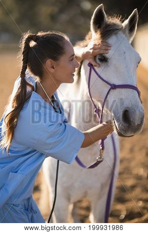 Side view of female vet checking horse while standing at paddock