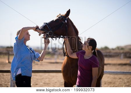 Woman assisting vet for checking horse teeth while standing on field in paddock