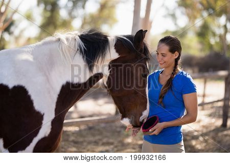 Smiling female jockey cleaning horse while standing at paddock