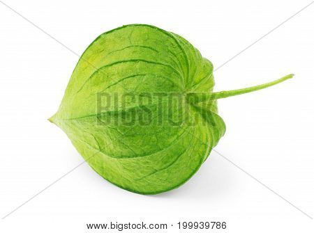 green physalis on white background Macro, Copy, Space, Isolated, Clipping, Closeup, Path,