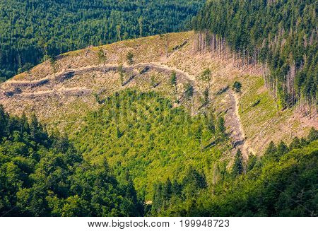Path Through Forest Clearing On Mountain Slope