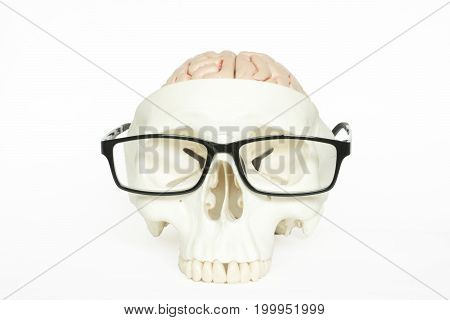 Human brain model front view and eyeglasses isolated on the white background