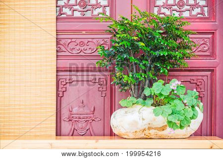 Bonsai and rock on a table in front of a purple door, Chengdu, Sichuan Province, China