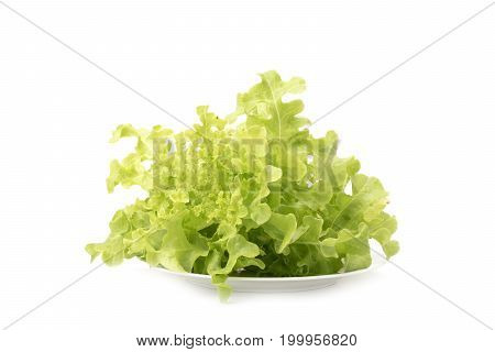 green oak lettuce in white ceramic plate isolated on white background