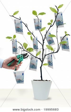Money Tree Cut