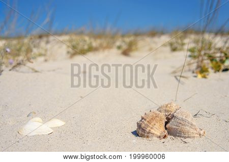 Seashells on a sand background with copy space. Hill and blue sky on background.