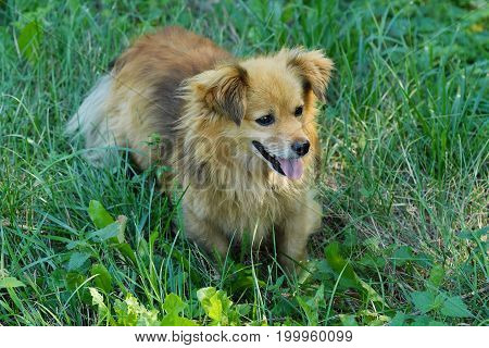 Beautiful brown dog in the grass view