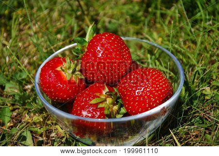Fresh strawberries in a glass bowl in the green grass