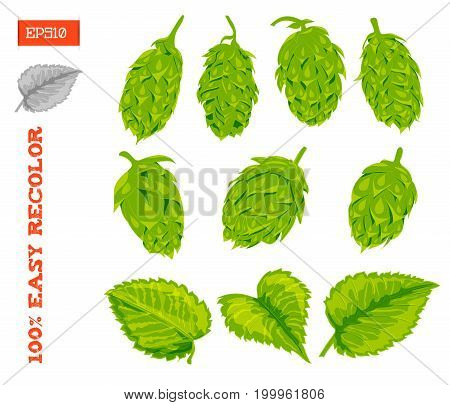 Set of cones and leaves of a hop plant isolated on white. Vector illustration. Hand drawing