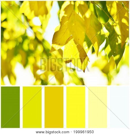 Autumn leafs and palette of colors.  Colour swatches.