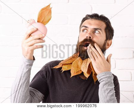 handsome bearded man with stylish mustache and autumn yellow leaves in long beard on surprised face with pink piggy pig bank on white brick wall background