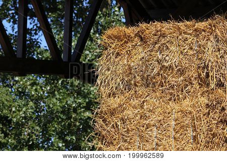 Straw to feed the horses of the stables placed in the hangar