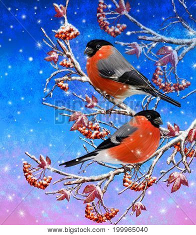 Christmas greeting card. Two bright bird bullfinch bird sitting on a branch snow red berries. Winter background.