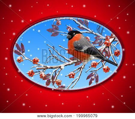 Christmas greeting card. Two bright bird bullfinch bird sitting on a branch snow red berries.