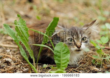 Beautiful brown little cat in the grass