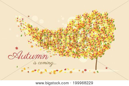 Autumn is coming vector illustration of wind ripping out yellow leaves from the golden tree. Autumnal background for seasonal card and web banner