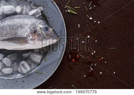 Raw dorado on ice in gray platter at black background. Minimalistic mokeup for seafood restaurant or fish market. Top view, copy space