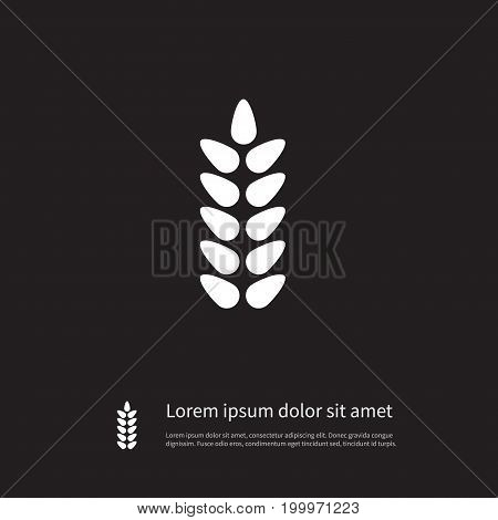 Grain Vector Element Can Be Used For Wheat, Grain, Harvest Design Concept.  Isolated Wheat Icon.