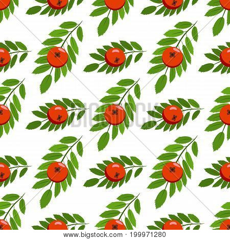 Rowan bunch berries red ripe leaf tree autumn season natural fruit vector illustration. Bunch of juicy rowan berries vitamin plant. Seamless pattern background christmas bright delicious decoration.