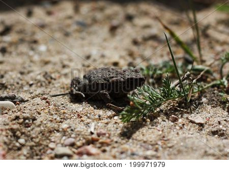 Common Toad on timber, asian toad brown, Common Toad Bufo Bufo , poison animal amphibian