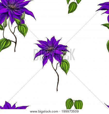 Seamless pattern with clematis leaves and stems on white background. Vector