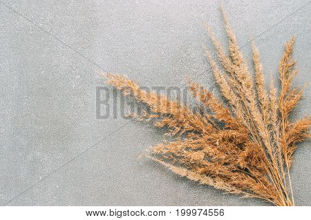 Dry autumn grass on grey backgroundtop view.