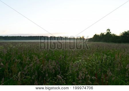 Dawn of the wild grass on the field in the morning fog