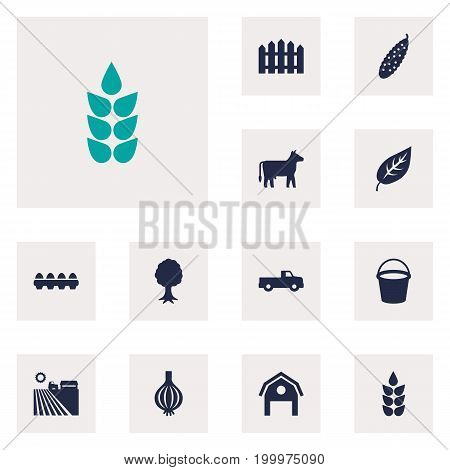 Collection Of Grain, Kine, Timber And Other Elements.  Set Of 12 Agricultural Icons Set.