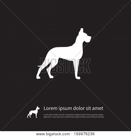 Whippet Vector Element Can Be Used For Whippet, Hound, Dog Design Concept.  Isolated Hound Icon.