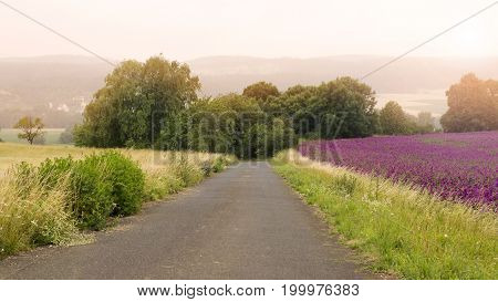 paved lane on the countryside with fields of flowers and corn