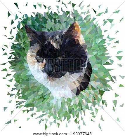 Portrait of a cat in vector polygon technique