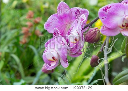 Colorful orchid flower in the summer garden.