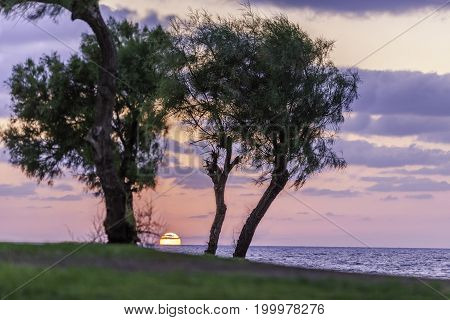 Pink and purple sky with clouds sunset with pine trees and sea green loan and footpath
