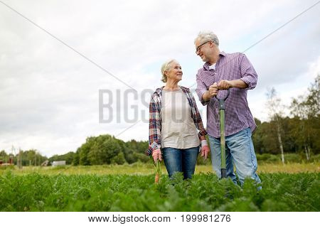 farming, gardening, agriculture, harvesting and people concept - senior couple with shovel picking carrots at farm garden