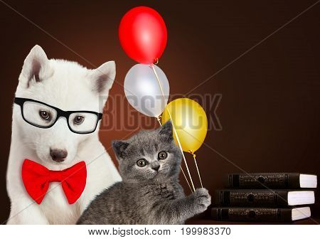 Cat and dog together with books and balloons, Scottish kitten, Husky puppy. Celebration mood