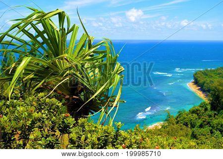 Lush green plants overlooking Kee Beach taken from the Napali Coast in Kauai, HI
