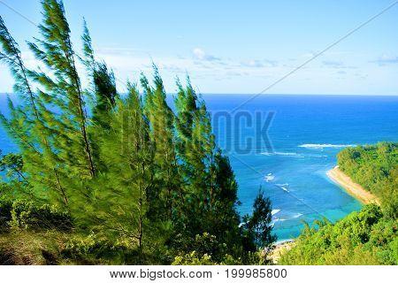 Lush plants overlooking Kee Beach taken from the Napali Coast in Kauai, HI