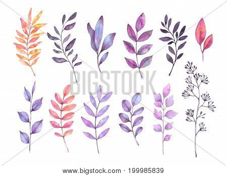 Hand Drawn Watercolor Illustrations. Autumn Botanical Clipart. Set Of Purple Leaves, Herbs And Branc