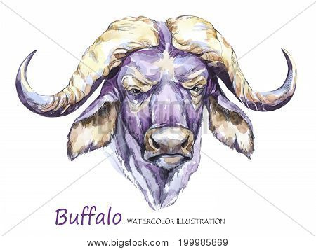 Watercolor formidable bull on the white background. African animal. Wildlife art illustration.