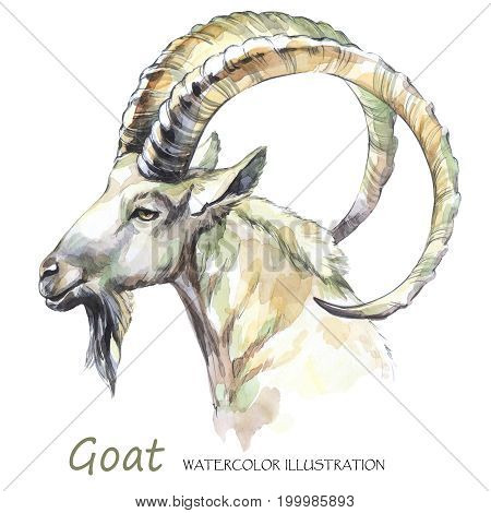 Watercolor goat on the white background. Mountain animal. Wildlife art illustration.