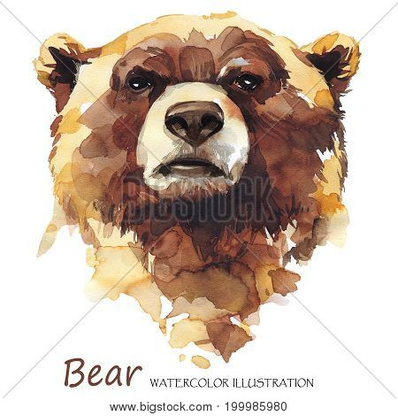 Watercolor bear on the white background. Forest animal. Wildlife art illustration.