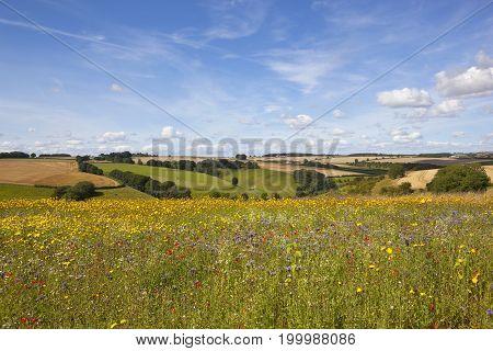 English Wildflower Meadow