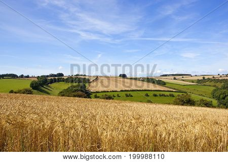 Barley And Patchwork Fields