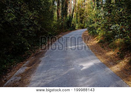 Curve Road In Forest. Deep Autumn Pine Forest